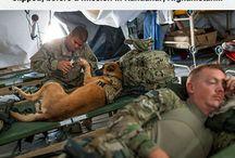 kutyák szolgálatban