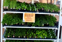 Local Organic Starter Plants! / We have plenty of Local Organic starter plants at your Valley location! / by La Montañita Co-op