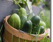 Cucumbers / by gardenlady