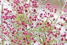 Inspiring Blooms