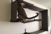cat poles