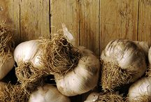 Glorious garlic / A collection of recipes featuring the 'stinking rose.'