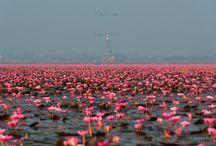 Thailandia / Destinazione dai mille volti dove la ricchezza naturale si accompagna un patrimonio storico-culturale tra i più antichi e importanti di tutta l'Asia. Scopriamo insieme il Paese del Sorriso...