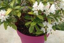 Fleurs et potager / Mon petit jardin en pot, en hauteur. Pour préserver mon dos et pouvoir profiter des fleurs, ainsi que quelques salades et un peu de radis et des herbes aromatiques