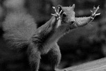 funny animal qoutes
