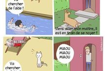 Chien vs chat