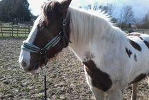 Horse Power / Horses