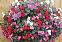 Garden - Hanging Baskets