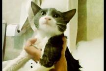 Cute Cat! <3 / by Camila Urrutia