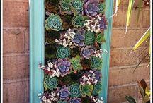 Gardens - Framed Succulents