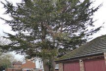 55A-Tree
