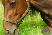 Koně, koníci, horses / Koně jsou krásná zvířata