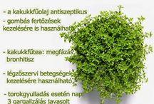 Természetgyógyászat, gyógynövények