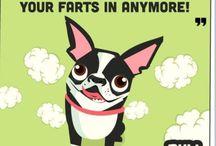 Boston Terriers!
