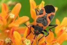 bogarak - bugs