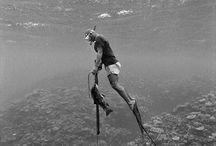diving: free / spearfishing / spearfishing