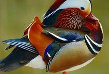 Birds watervogels 2