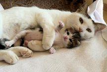 Lovely pets / Toda a graça dos animais.