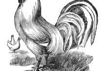Gallo / Gallo