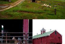 Goat Farm / by Jen Quinlan