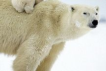 Mamá y osito polar
