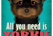 Yorkie Cuteness / My love for Yorkies