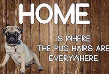 Pug Love.......
