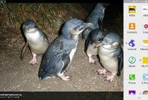 diamond island blue penguins