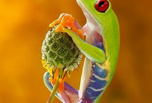 Frogs, Snakes, Reptiles / by David Howton