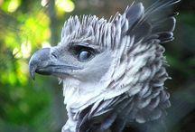 鳥/猛禽類
