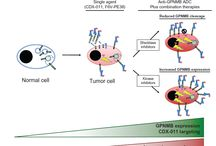 GPNMB: emerging therapeutic target in cancer / Abstract: Molecularly targeted therapies are rapidly growing with respect to their clinical development and impact on cancer treatment due to their highly selective anti-tumor action. However, many aggressive cancers such as triple-negative breast cancer (TNBC) currently lack well-defined therapeutic targets against which such agents can be developed.  Read this review and sign up to receive OncoTargets and Therapy journal here: http://www.dovepress.com/articles.php?article_id=13605