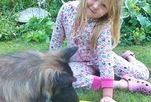 Habiliteringshund / Hund som pedagogisk resurs för personer med autism