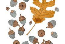 autum leafs