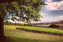 Where we loved to work: De Bortoli winery, Yarra Glen, Australia  / De Bortoli Wines is a third generation Australian family wine company established in 1928. www.debortoli.com.au