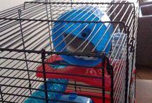 Mijn hamster bollie