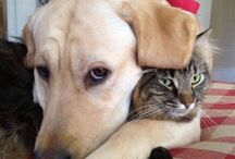 Cats and. Dogs