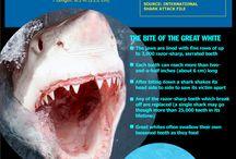 Shark Week Science / by Science4Us