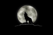For the love of Wolves / by Andrea Rooks