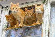 кошки и окошки