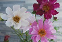 Flowers ( fiori)