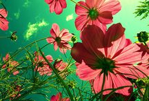 Blommor jag vill ha