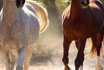 Equus the Noble / by Khaili Allen