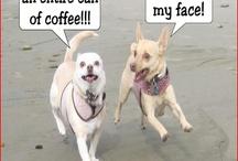 Hee hee...funny / by Deidre Shannon