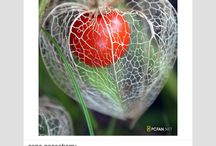 Organic formes