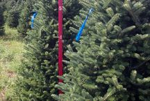 Mail Order CHristmas Trees / Mail order Christmas trees are a great and very easy way to get that fresh tree to your home.