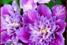8 kwiaty