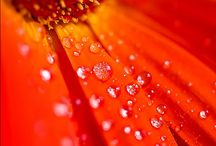 Flowers - God's way of bringing beauty to an otherwise ugly world! / by Mike Hill
