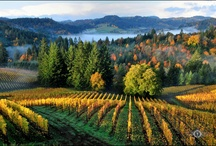 let's explore oregon wine country / Oregon wineries, tasting rooms, and restaurants Chris and I have visited. / by Louise Thudium