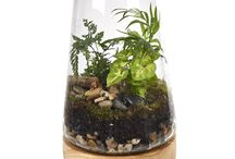 Bloom'd terrariums