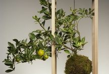 horticulture: kokedama / by Berried Treasures